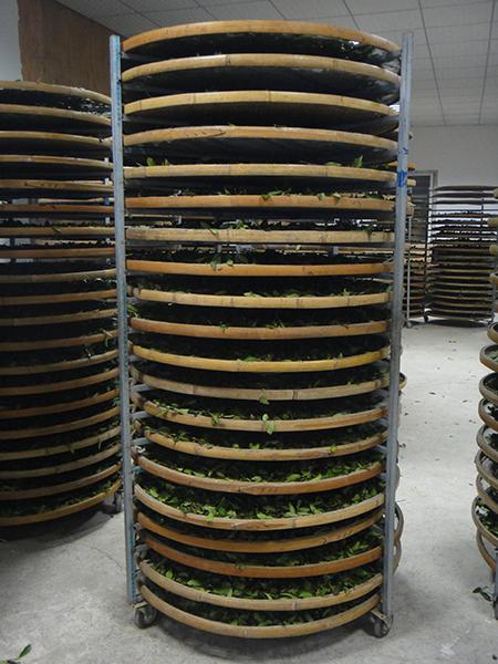 Oxidieren von Tie Guan Yin