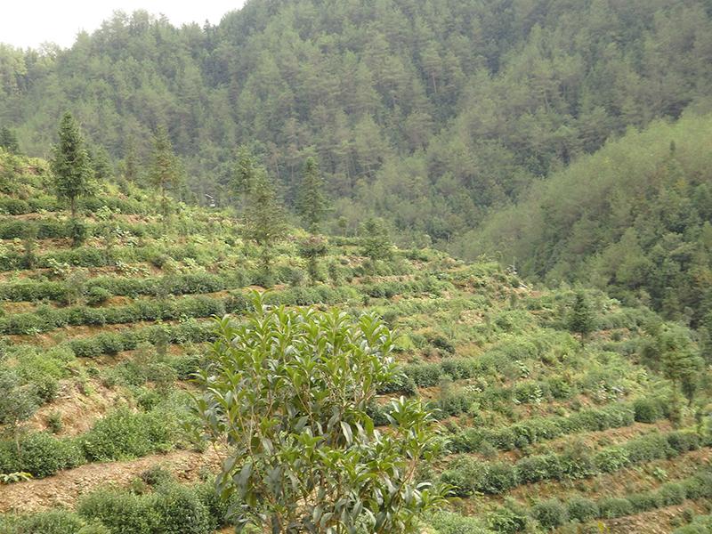Ding Gu Da Fang (Foto: Fang Jianming)
