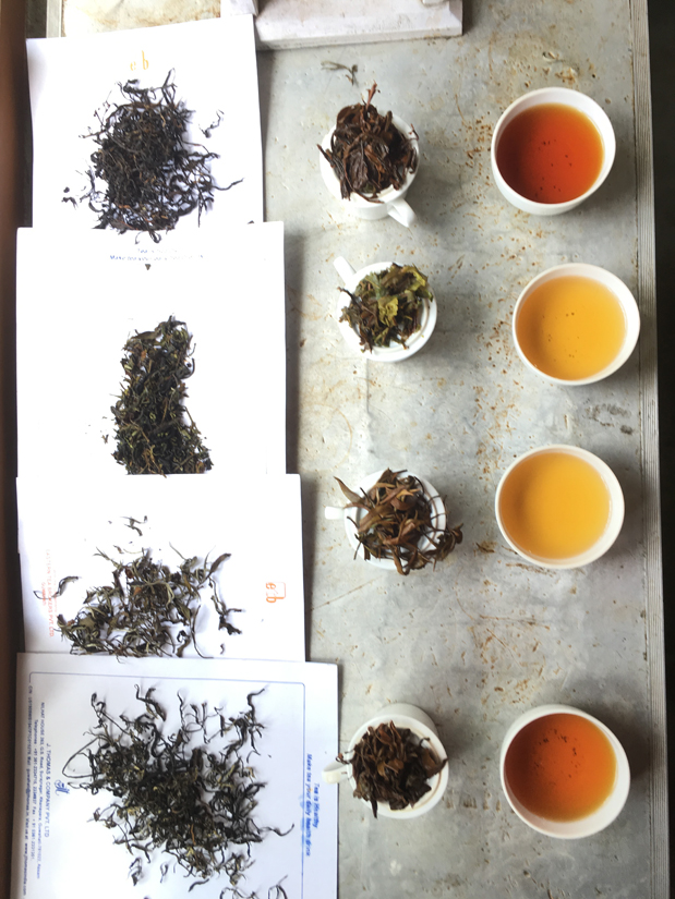 Degustation der Experimente in Hatidubi