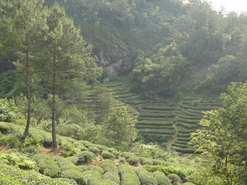 Teegarten Wuyishan