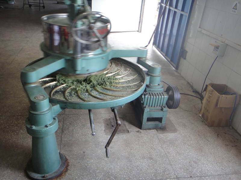 China-Grüntee wird oft in Rollmaschinen gerollt