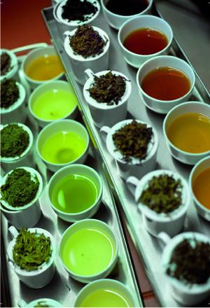 Teeschule